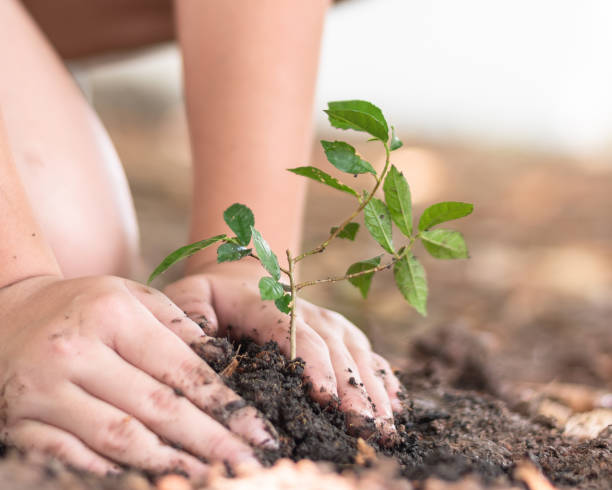 tree planting growing on soil in girl child's hand for saving world environment, tree care, arbor day,tu bishvat (b'shevat) environmental protection, ecological education concept for school students - teacher school solo imagens e fotografias de stock