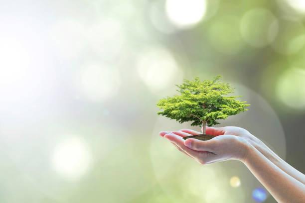 tree planting on volunteer's hands for saving environmental ecosystem and natural preservation concept - teacher school solo imagens e fotografias de stock