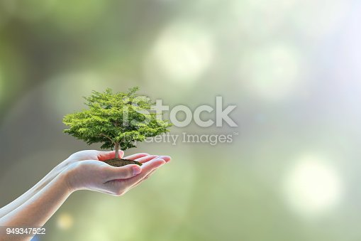 istock Tree planting on volunteer's hands for saving environmental ecosystem and natural preservation concept 949347522