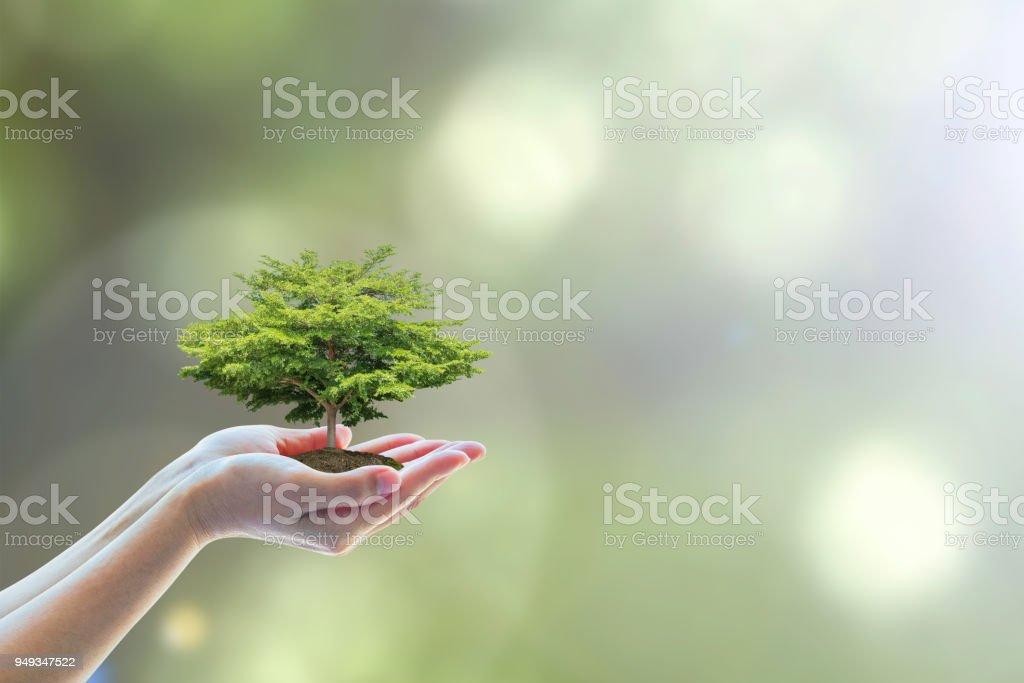 Plantation d'arbres sur les mains du volontaire pour sauver l'écosystème environnemental et le concept de conservation naturelle - Photo
