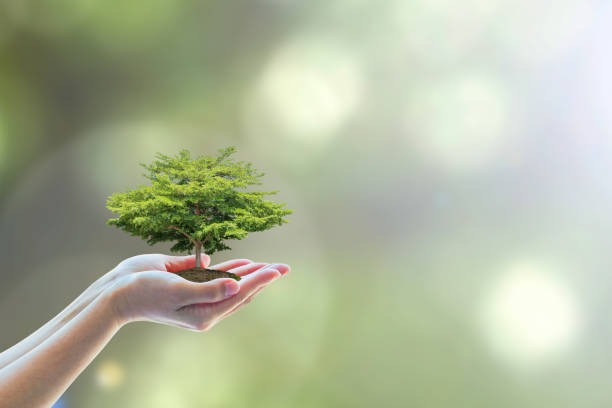 tree planting on volunteer's hands for saving environmental ecosystem and natural preservation concept - responsible business stock photos and pictures