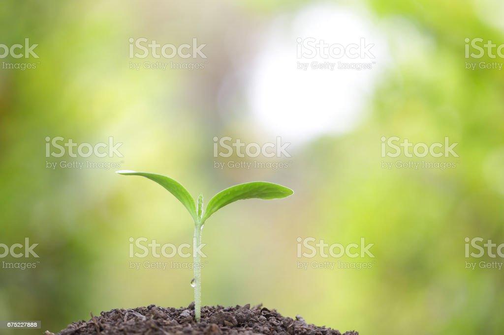tree planting royalty-free stock photo