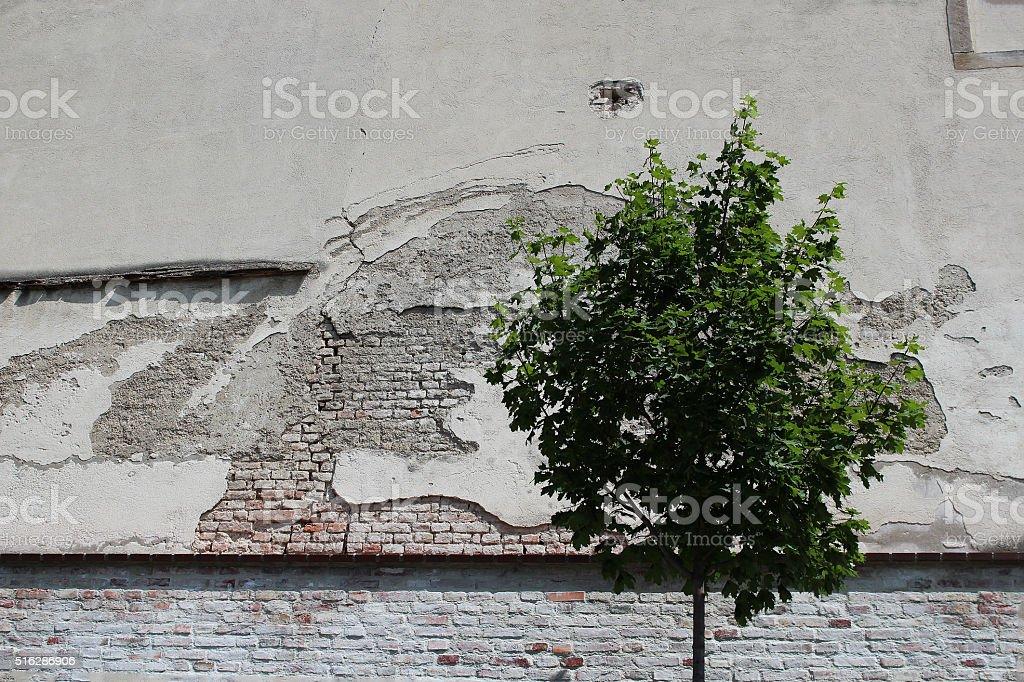 Tree Plus Wall Equals Art stock photo