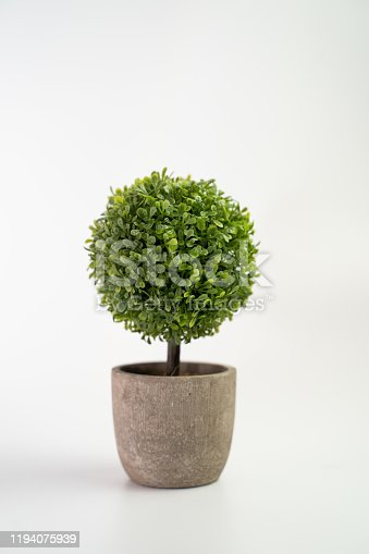 istock Tree pot on white background and copyspace. Houseplant for decorations 1194075939
