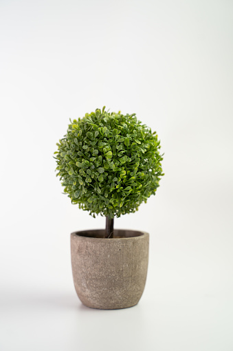 Tree pot on white background and copyspace. Houseplant for decorations