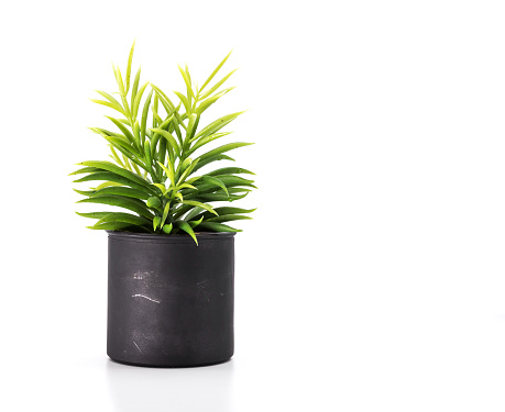 Tree pot on white background and copyspace. Houseplant for decorations.