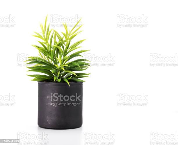 Tree pot on white background and copyspace houseplant for decorations picture id893504198?b=1&k=6&m=893504198&s=612x612&h=hdbbrr rbd6ciqkssz31i47qw wk0xvws6laopu q9w=
