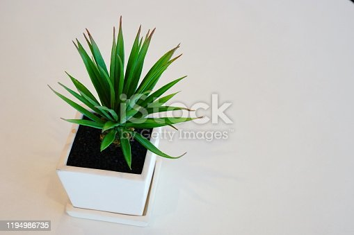 Pot cactus on white background