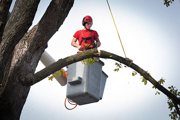 tree pruning service arborist trimming branches with chainsaw horizontal - tree surgeon stock photos and pictures