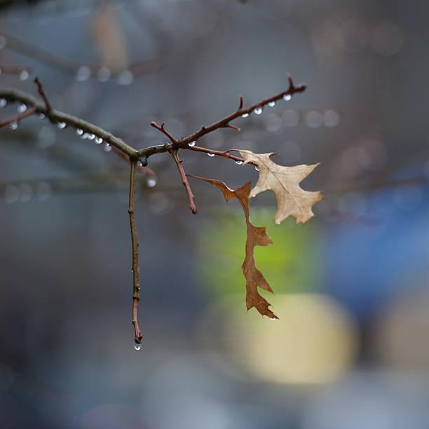 Baum Regentropfen – Foto