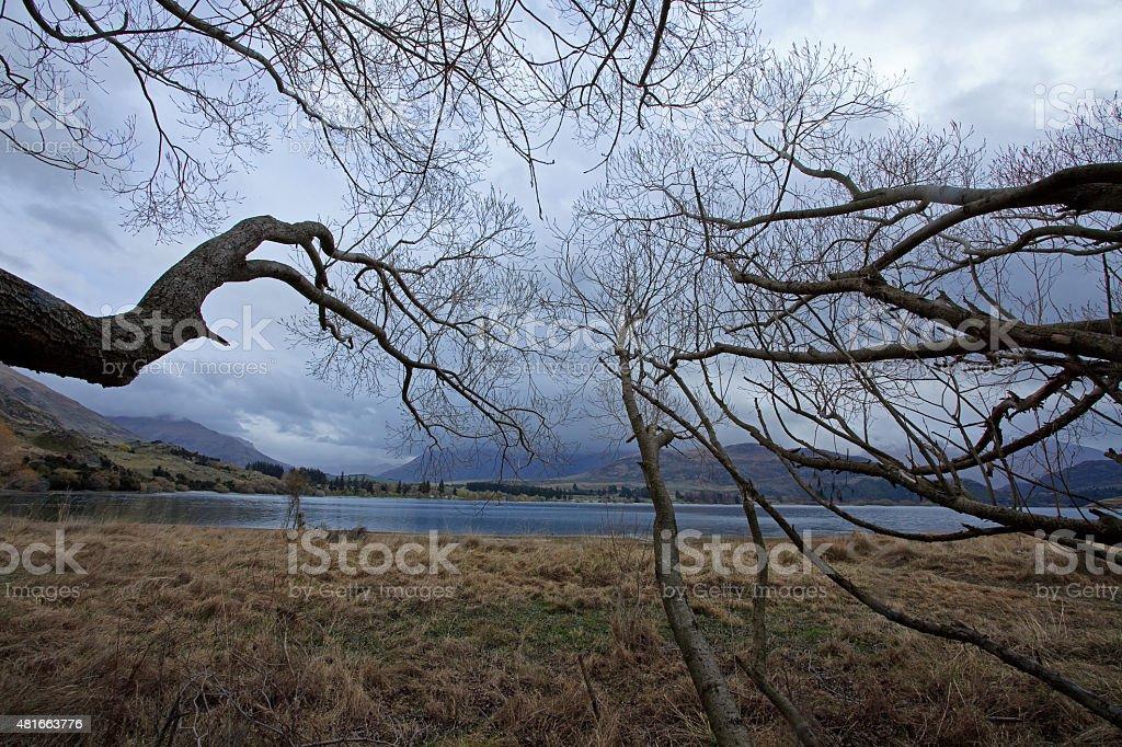 Tree reaching to the lake stock photo