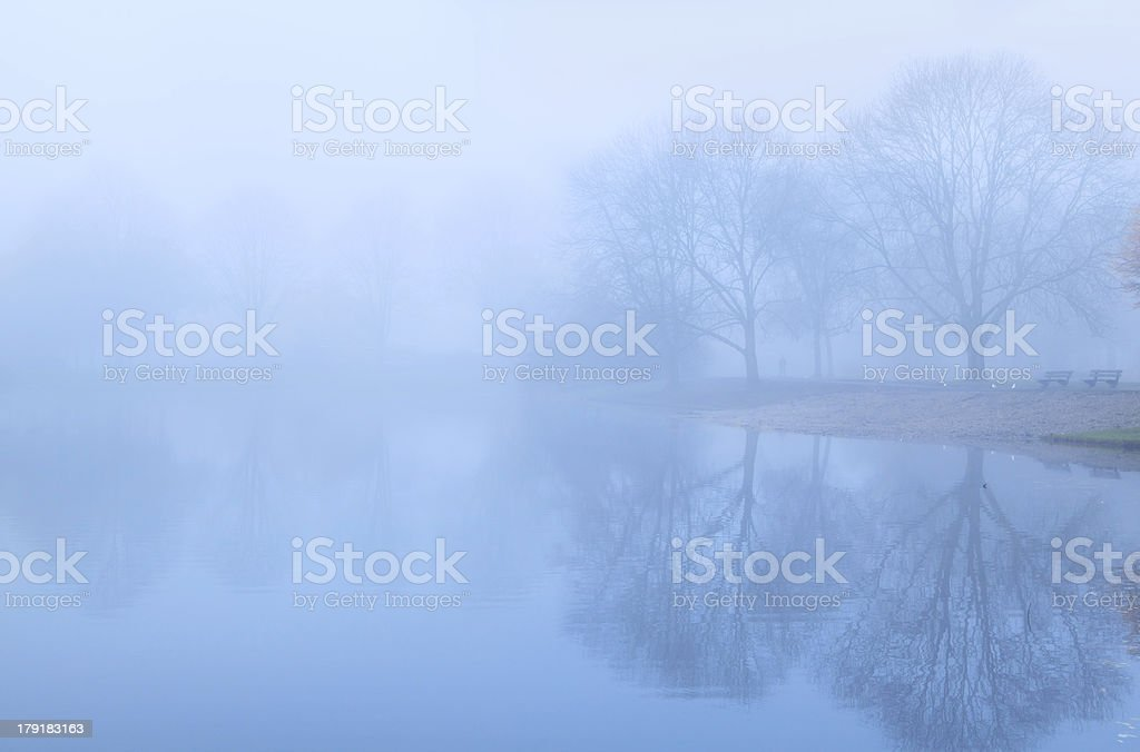 tree reflected in lake and fog royalty-free stock photo