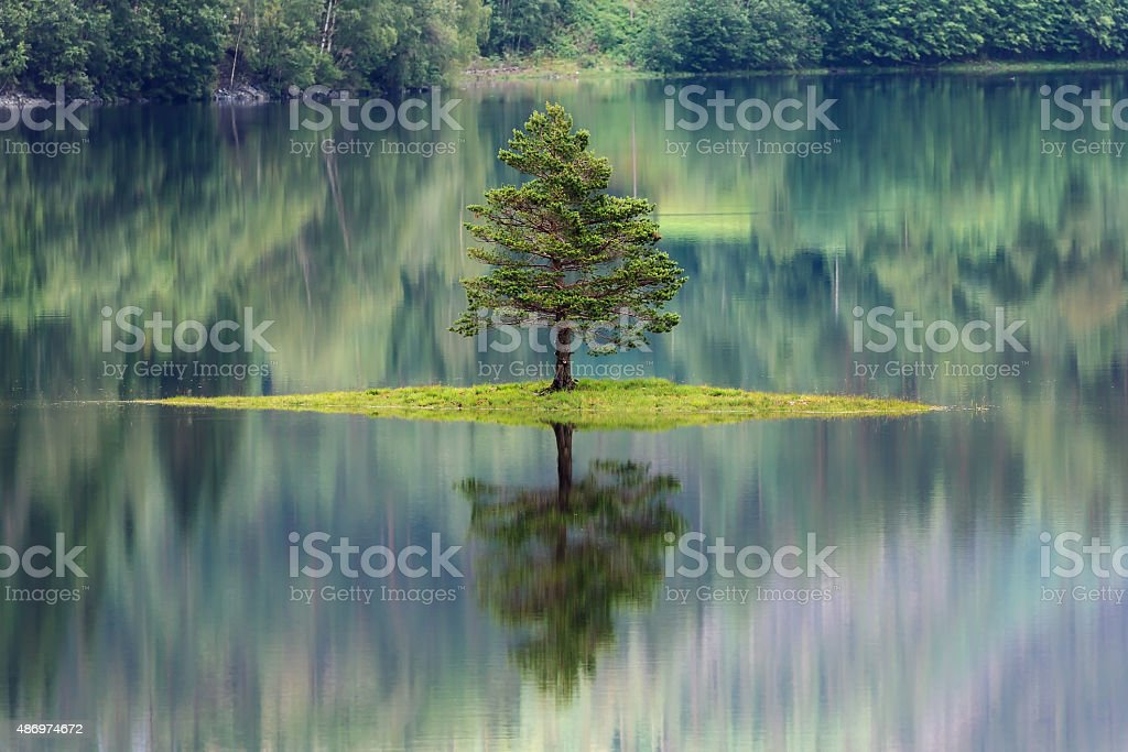 Tree reflecting in a lake in Norway stock photo