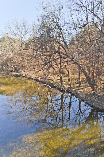 istock Tree reflection at Brushy Creek Regional Trail 507844720
