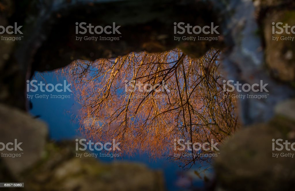 Tree reflection in a pond royalty-free stock photo