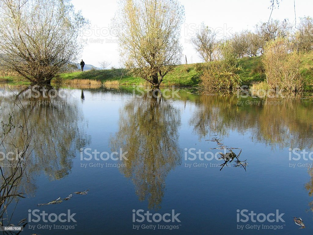 Tree reflection in the lake royalty-free stock photo