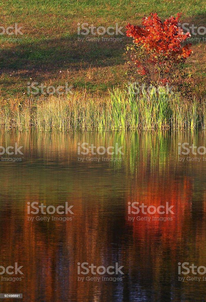 Tree reflection royalty-free stock photo
