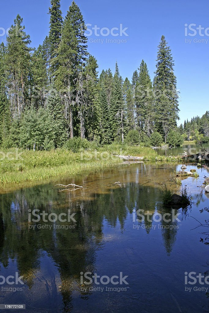 tree reflections in pond royalty-free stock photo