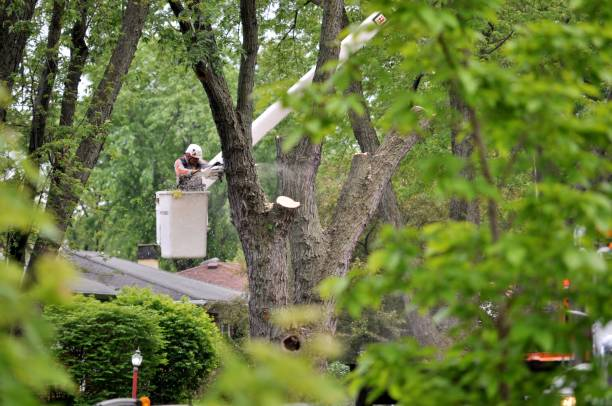Tree removal. Mount Prospect IL, USA- May 25, 2017: Arborist in crane cutting tree using chainsaw. forester stock pictures, royalty-free photos & images