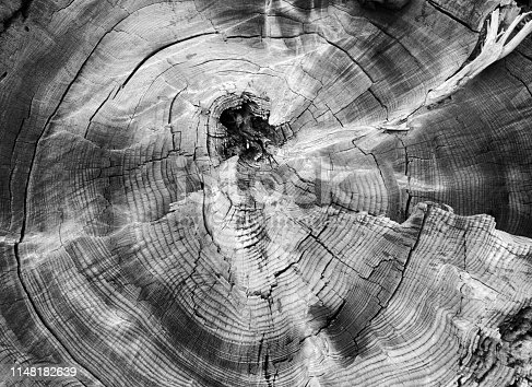 Tree ring Abstract background Textured