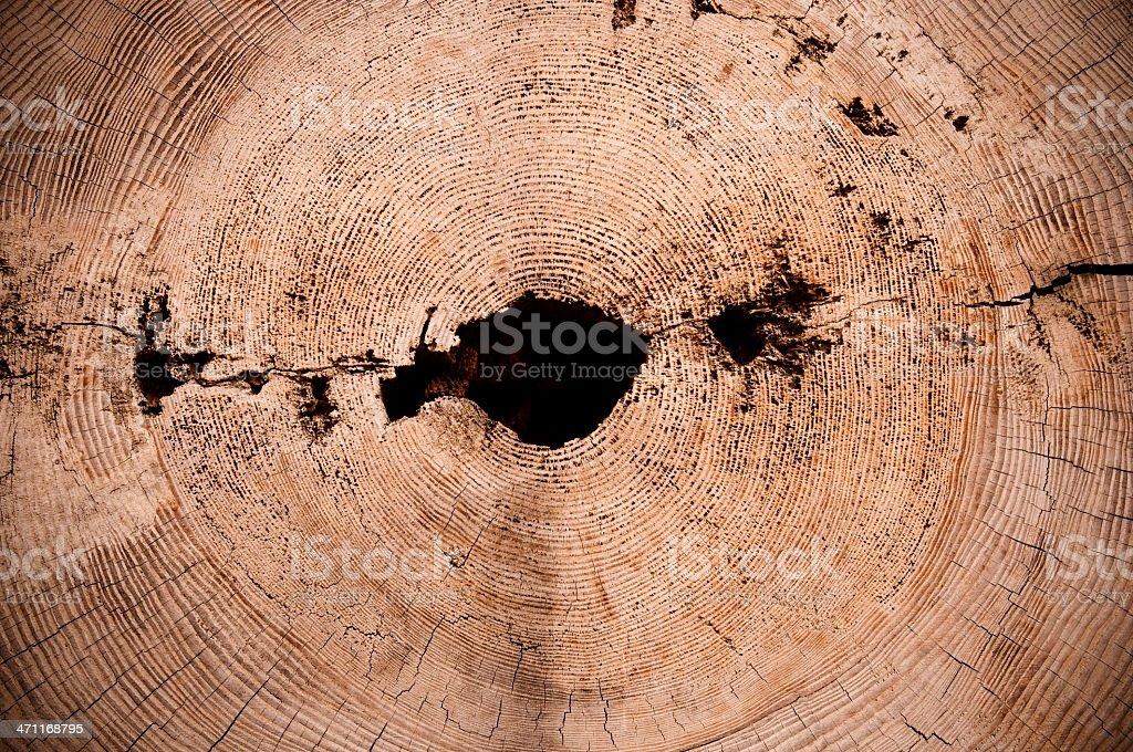 tree ring stock photo