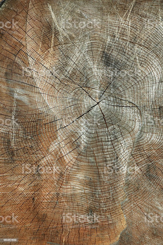 Tree rings and alien royalty-free stock photo