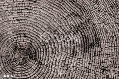 istock XXL tree rings close-up 136884134