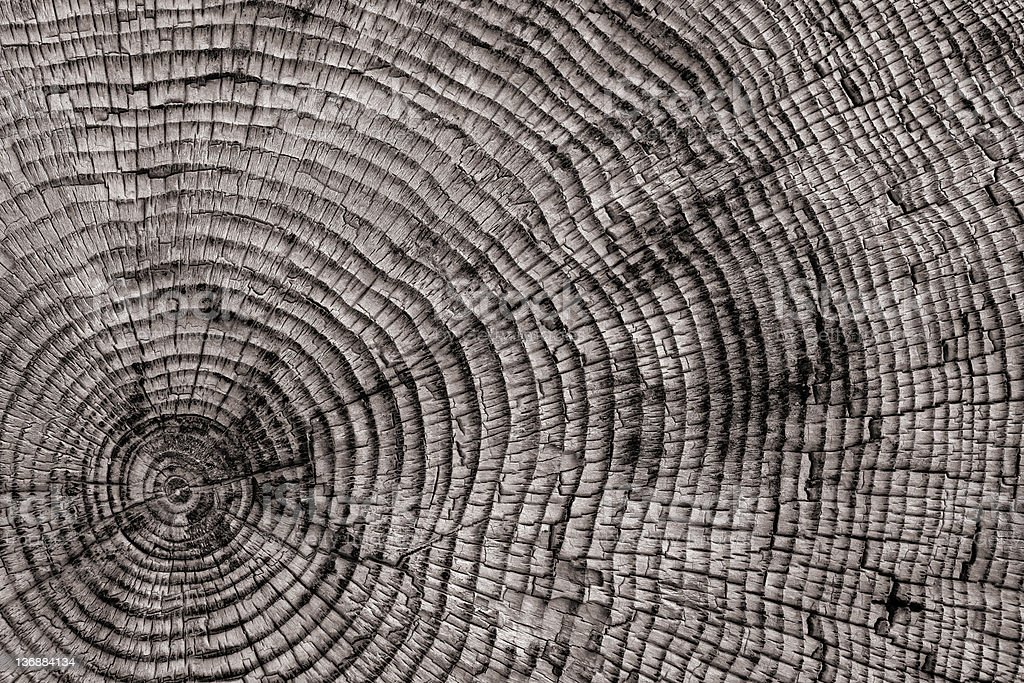 XXL tree rings close-up stock photo