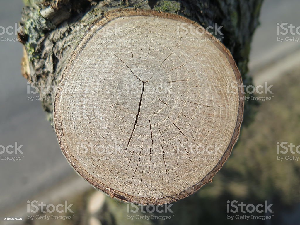 Tree rings Concentric stock photo