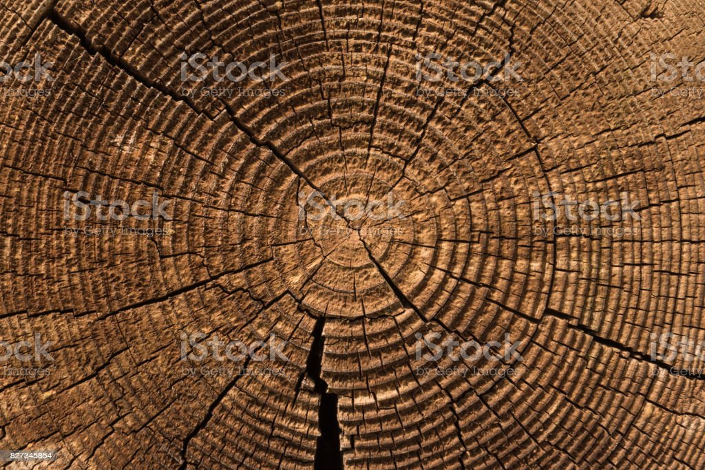 Vieja textura de madera resistida con la sección transversal de un tronco corte de anillos de árbol - foto de stock