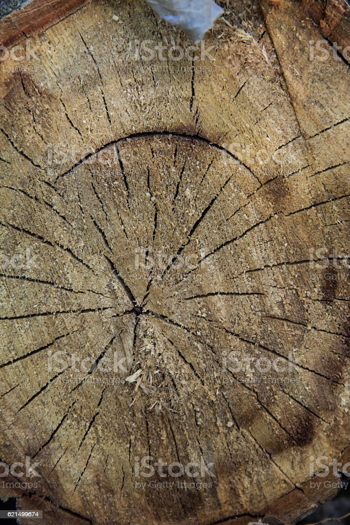 Tree rings old weathered wood texture with the cross section Lizenzfreies stock-foto