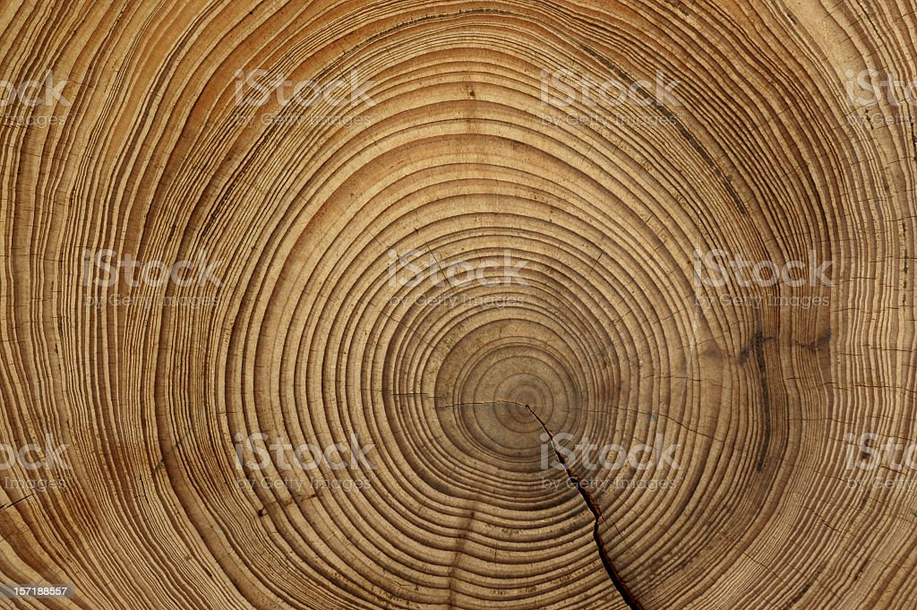 tree rings stock photo