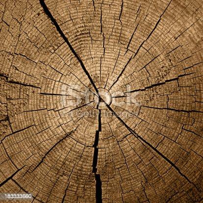 istock Tree Rings 183333660