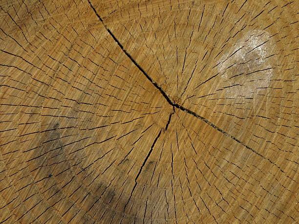 Baum Ringe – Foto