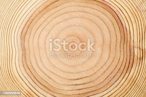 Extreme close-up of tree rings texture background.