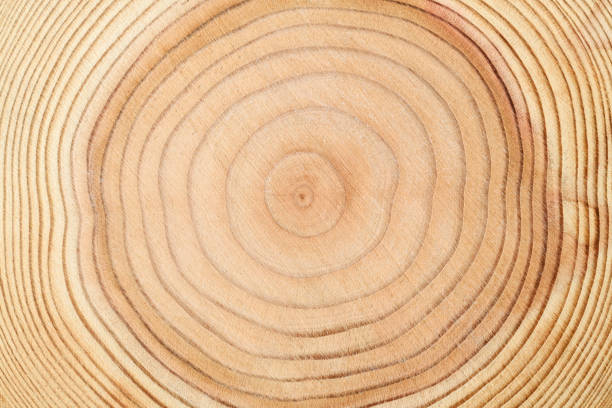 年輪のテクスチャ背景 - 木目の写真 ストックフォトと画像