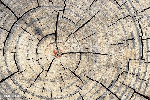 istock Tree Rings texture background 1303272630