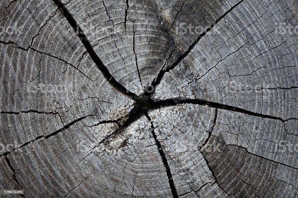 Tree rings xxxl royalty-free stock photo