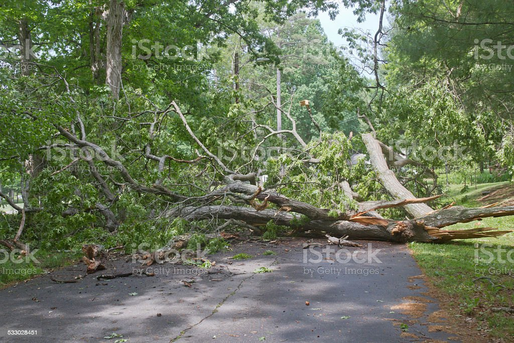 Tree Road Hazard stock photo