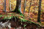 Tree root in autumn.