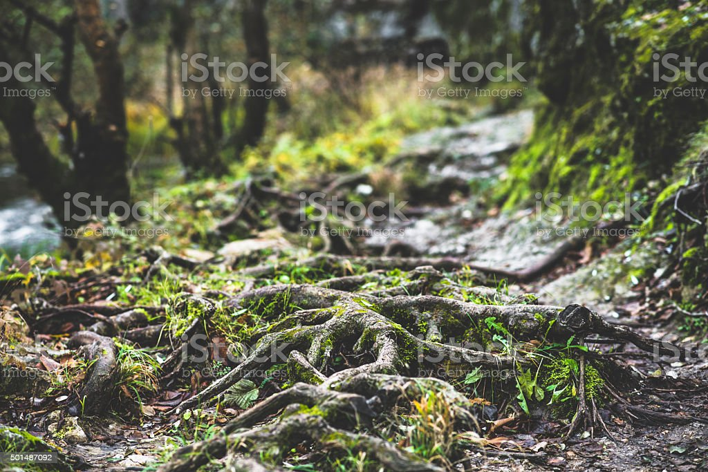 Tree root stock photo