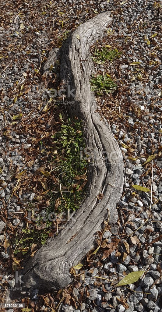 A tree root stock photo