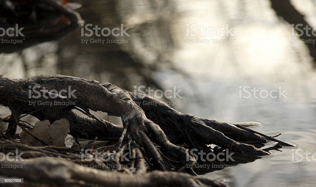 tree root system royalty-free stock photo