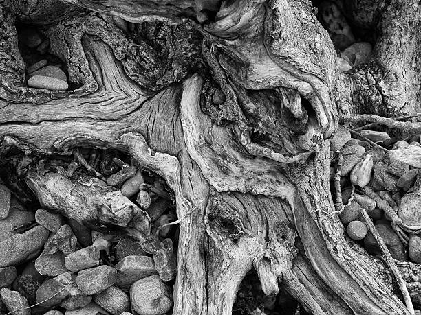 Tree roots abstract stock photo