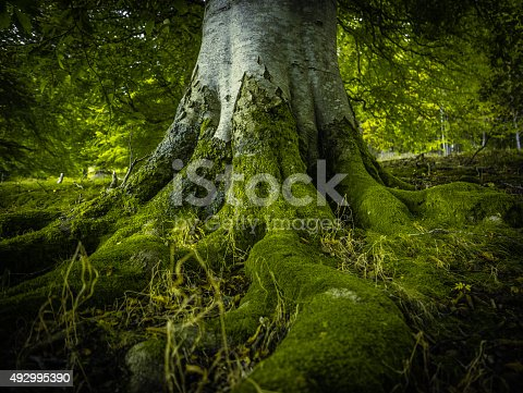 istock Tree Roots In A Forest 492995390