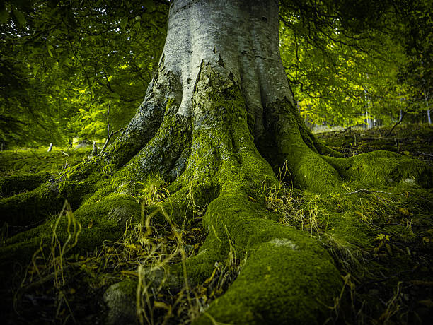 tree roots in a forest - tree roots stock pictures, royalty-free photos & images