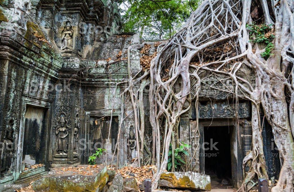 Racines des arbres sur le magnifique temple de Ta Prohm à Angkor, Province de Siem Reap, Cambodge. Elle a été fondée par le roi Khmer Jayavarman VII comme monastère bouddhiste Mahayana et Université. - Photo