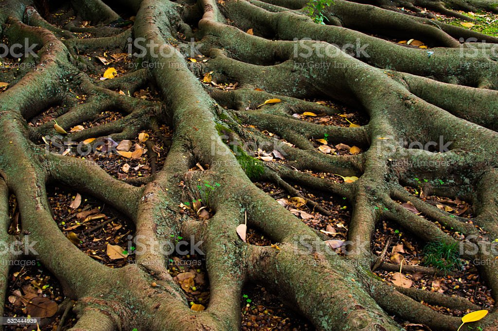 Tree roots stock photo