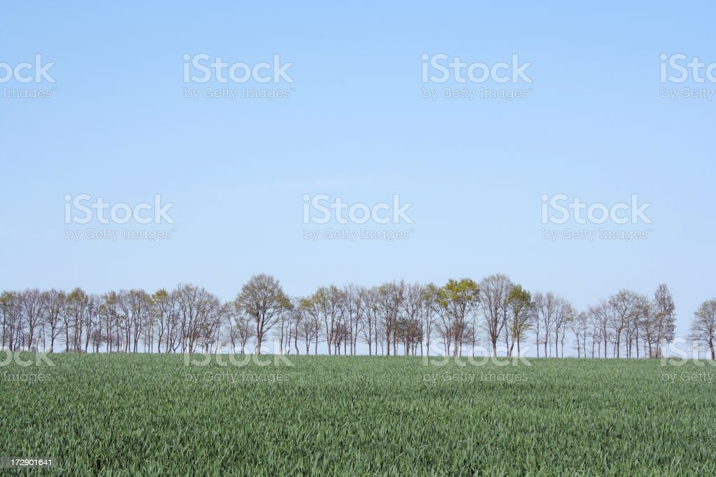 Tree row in the spring time royalty-free stock photo