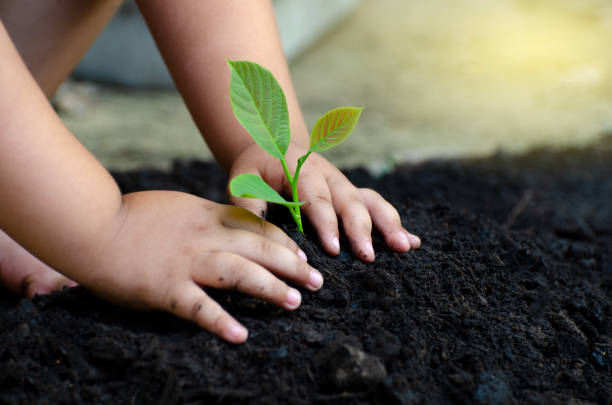 Tree sapling baby hand on the dark ground the concept implanted picture id1039079320?b=1&k=6&m=1039079320&s=612x612&w=0&h=ojntvorhealgfgfjtsd8sy7ahcq5 guouzbsqojbrx4=